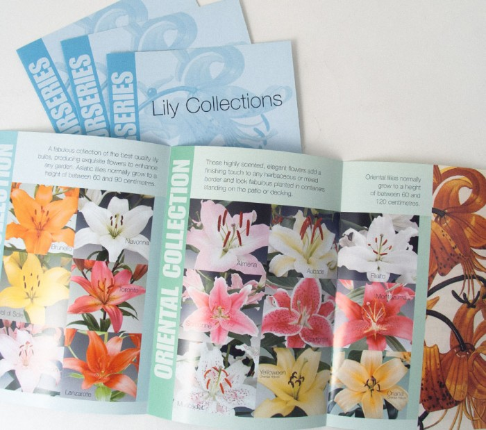 Emerald Lily Collections Trifold Leaflet