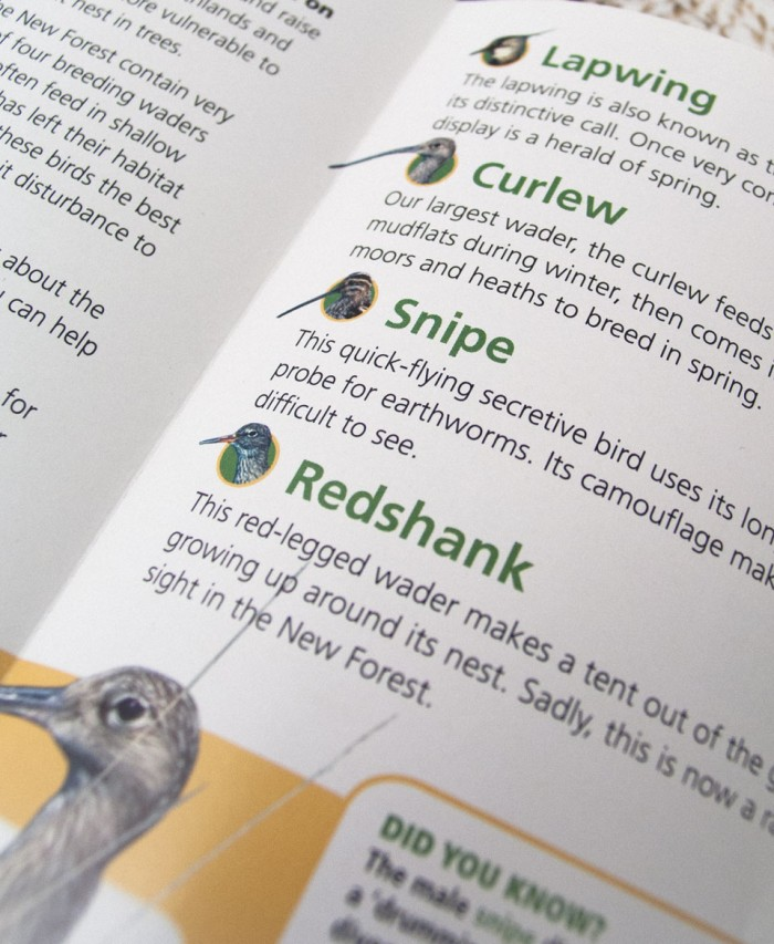 Trifold Brochure Detail
